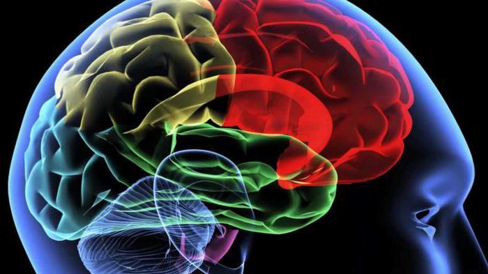 Нивалин при воспалительных заболеваниях мозга