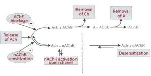 Механизм действия препаратаНивалин